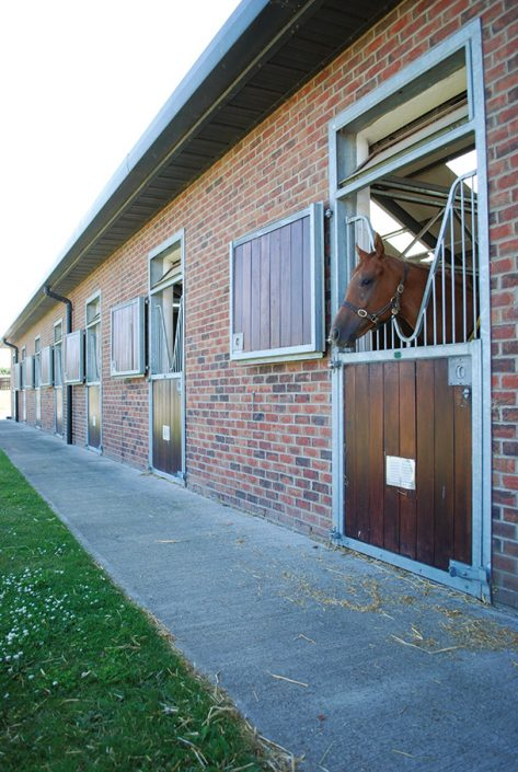 Equine builder Newmarket